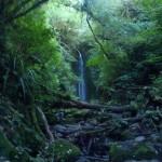 Nichols Falls