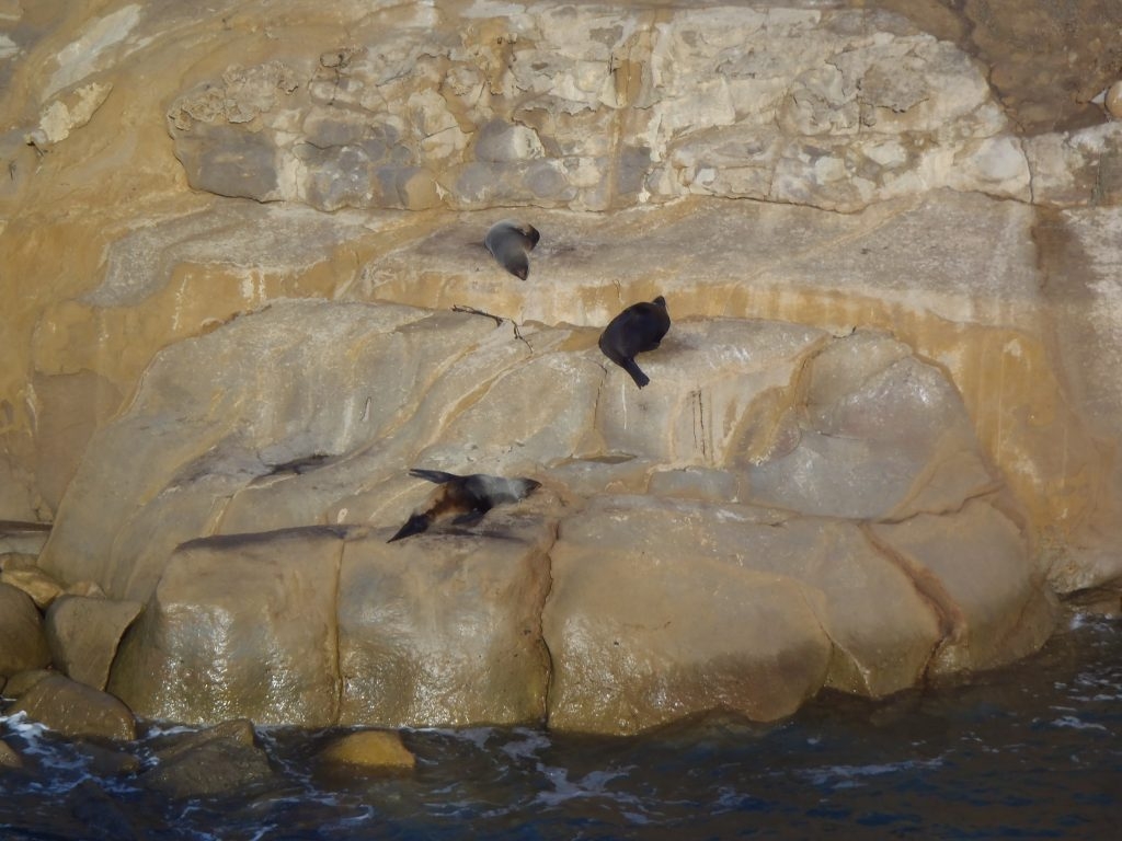 As long as they can nap, the seals don't care