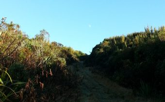 Morrisons Burn Track and the Elusive Fernbird