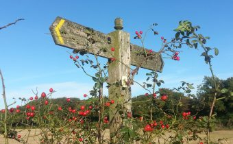 A Pilgrim's Challenge: Canterbury to Shepherdswell