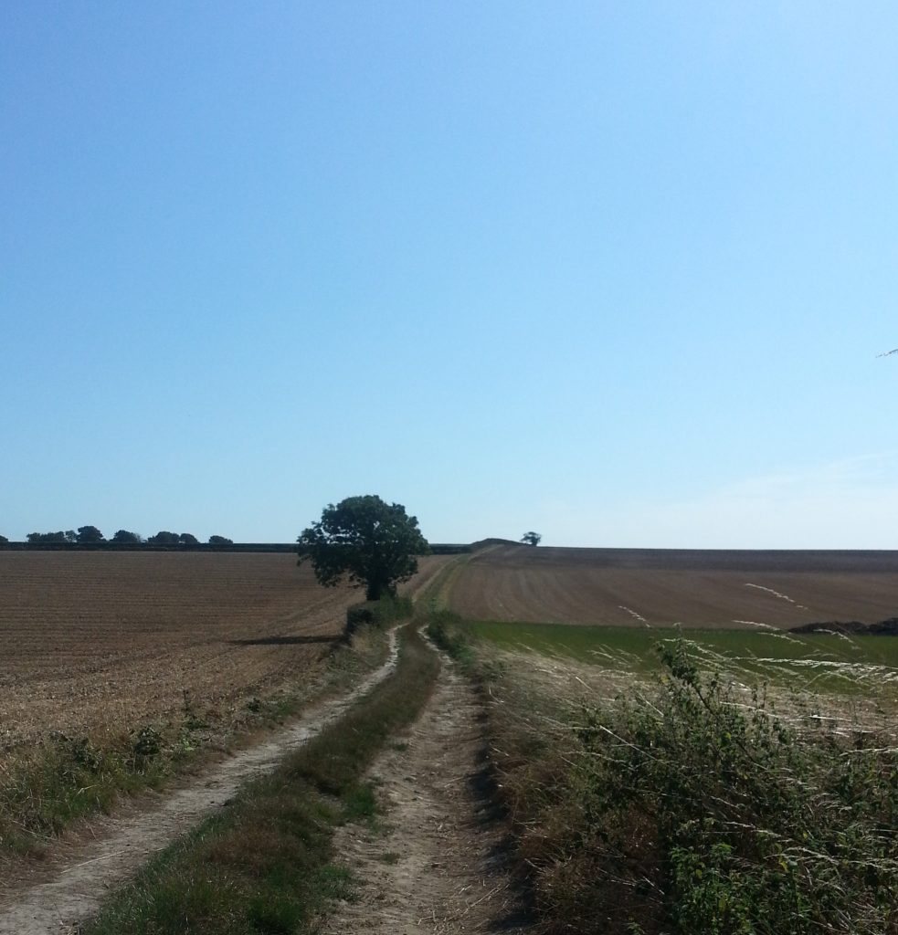 Trail through farm land