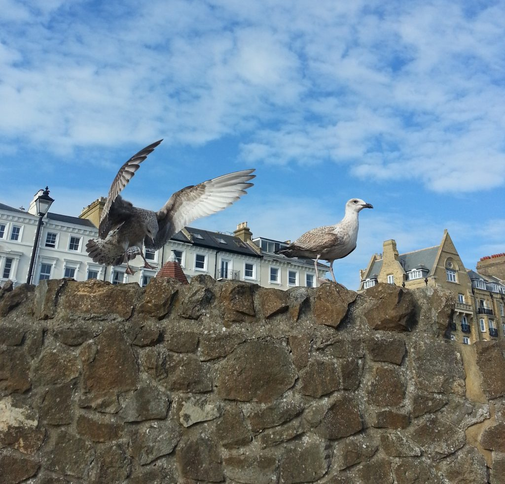 Gulls at Ramsgate