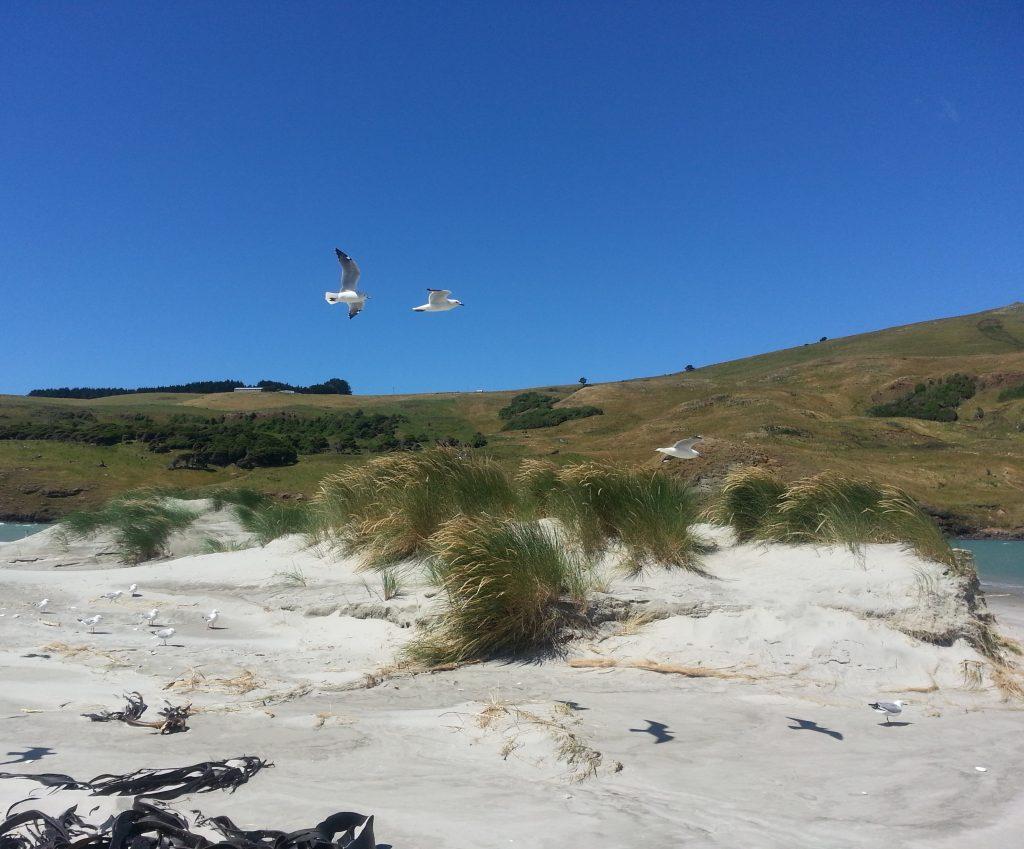 Birds at Papanui Inlet