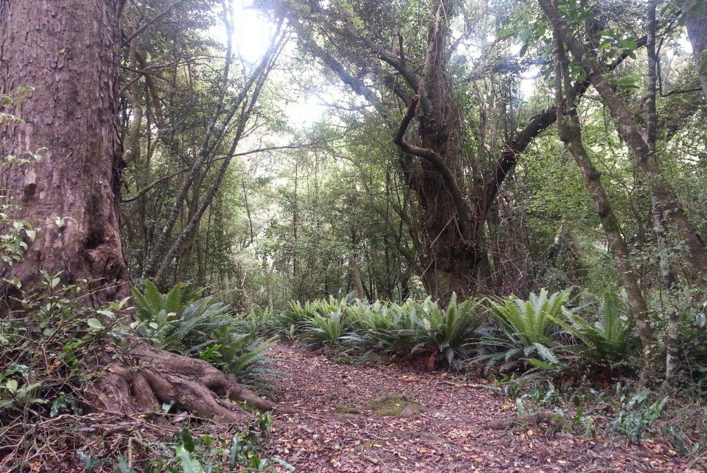 Croydon Bush
