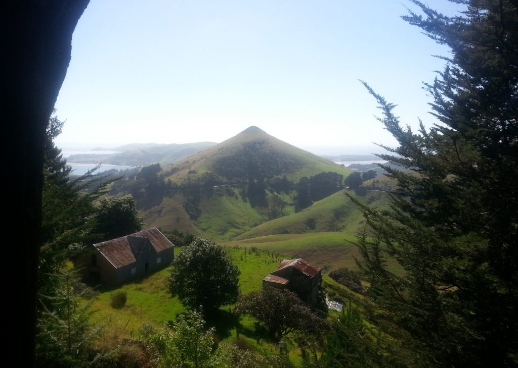 Larnach's Model Farm with Harbour Cone beyond