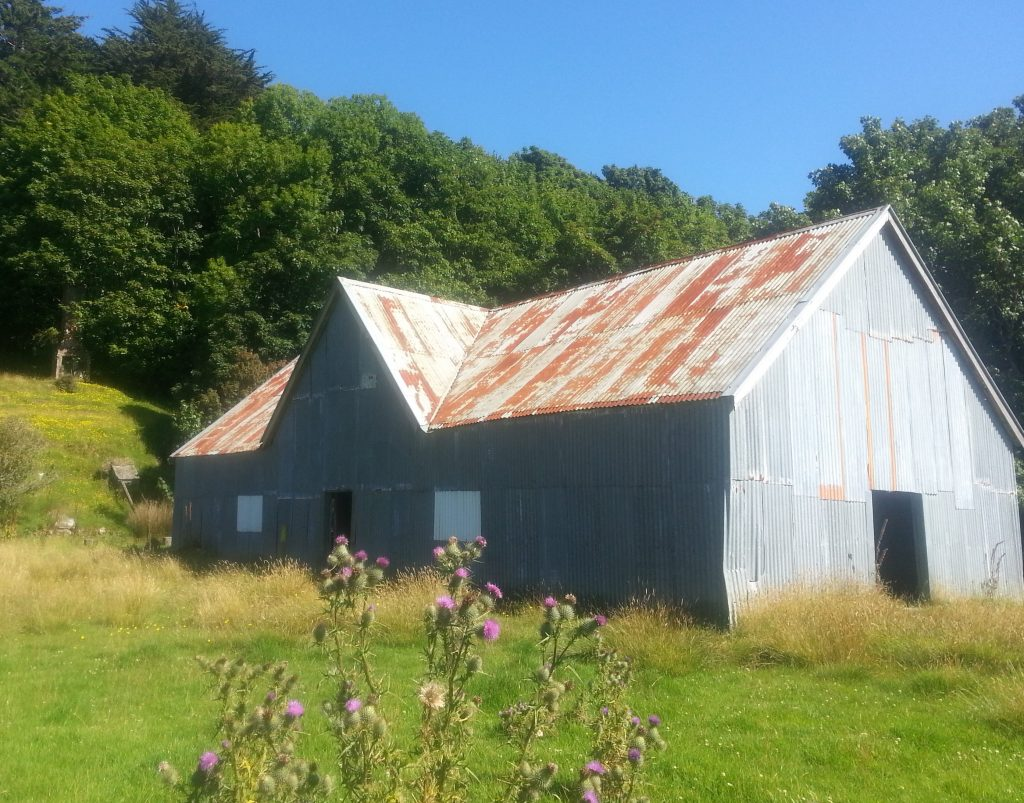 Larnach farm cattle byre