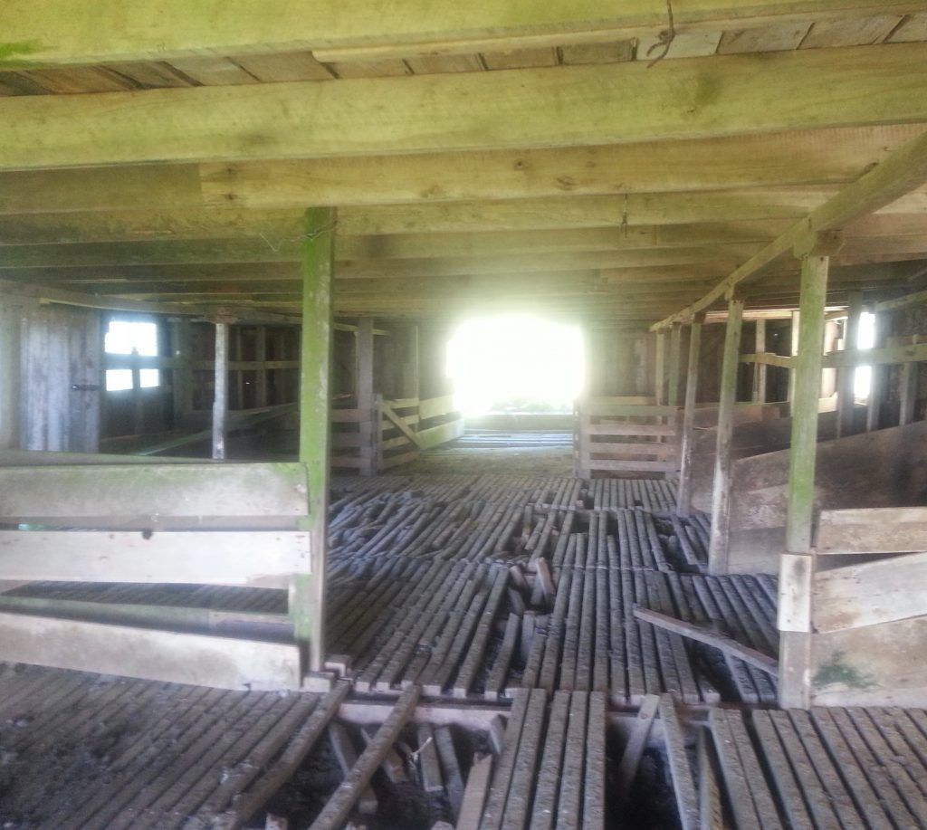 Interior of cattle byre