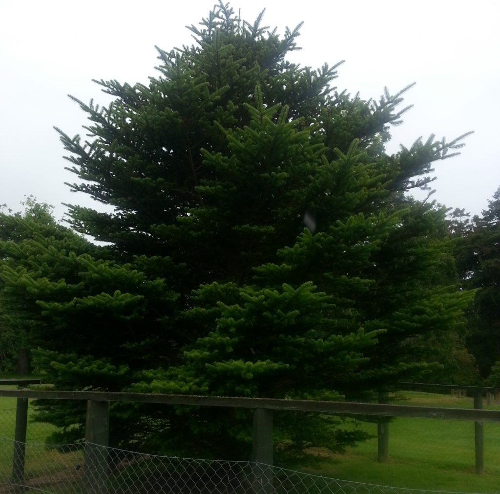 Memorial tree at Truby King Reserve