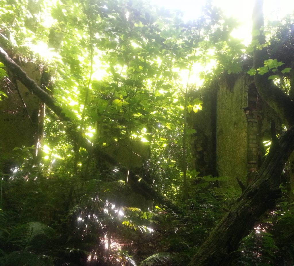 Ruin near Larnach Castle