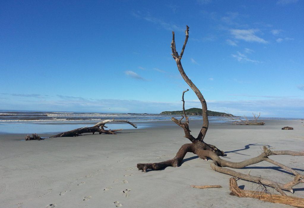 Taieri Island and beach
