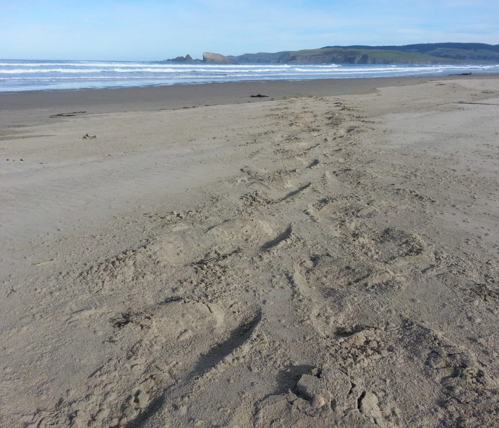 Seal tracks out to sea