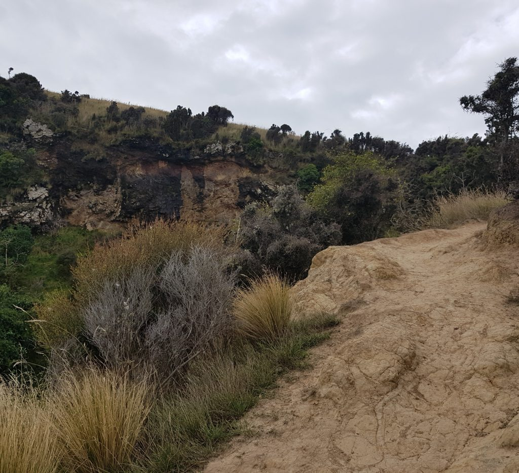 Up the hill from Aramoana
