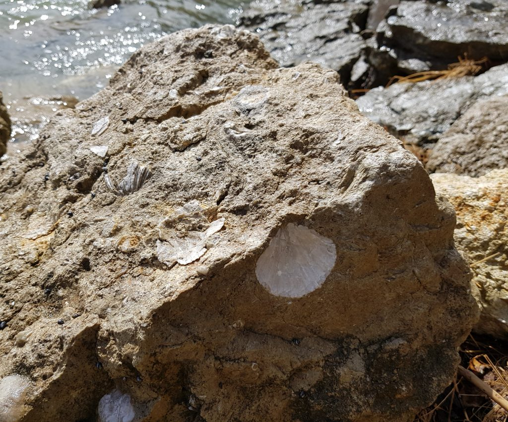 Fossils at Tarakohe