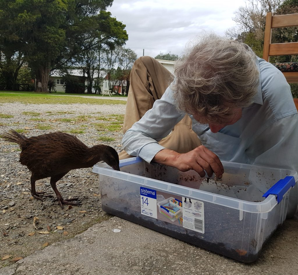 Weka helping an entomologist
