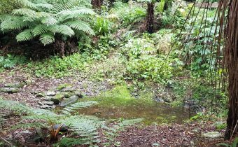 Tracing Otago's First Trout
