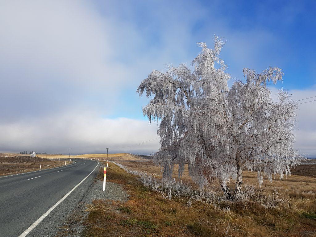 Icy tree near Lake Tekapo