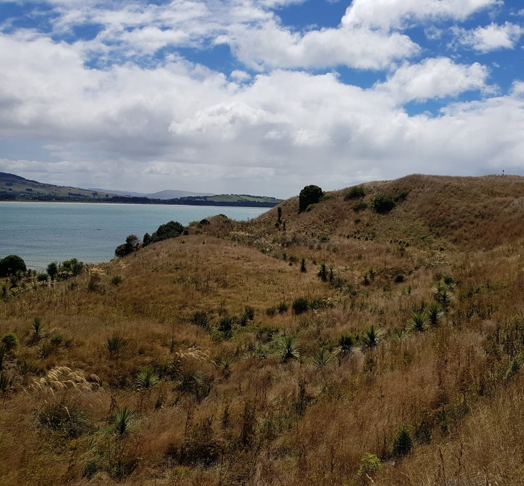 Spring location on Huriawa Peninsula