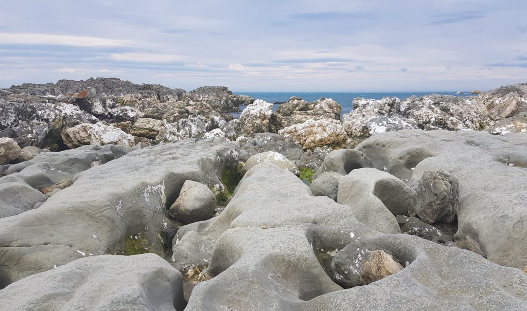Uplifted rocks at Ward Beach
