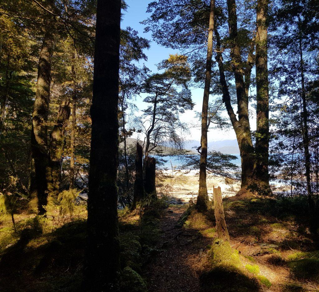 Lake Manapouri through the trees