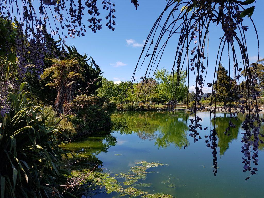 Timaru Lake at Kuirau Park