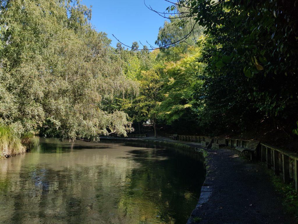 Sheppard walk and First Spring, Christchurch Botanic Gardens