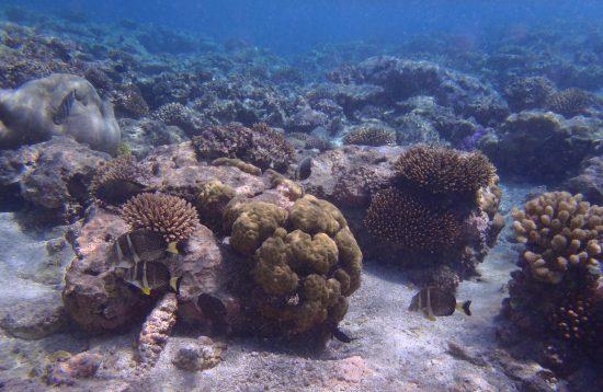 Underwater Niue