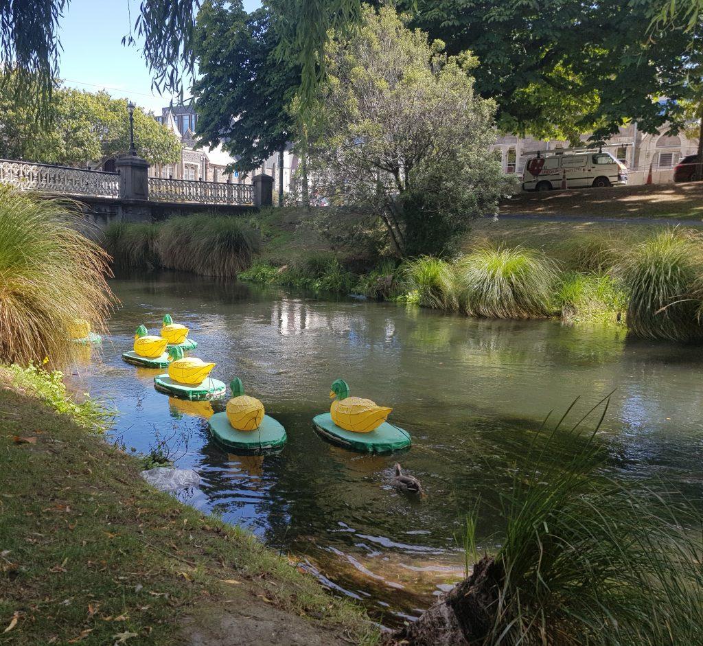 Lantern ducks, Christchurch