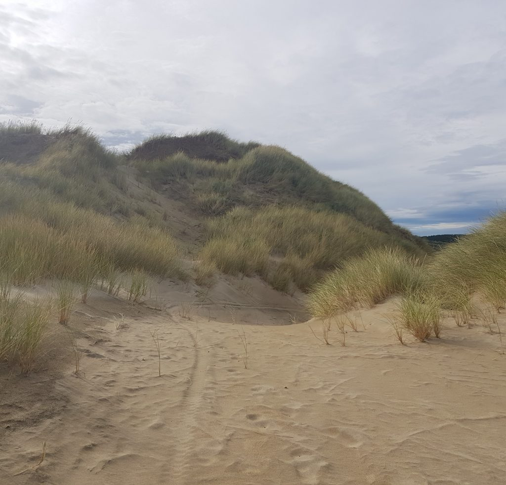 Entering the sand dunes at Waipapa Point