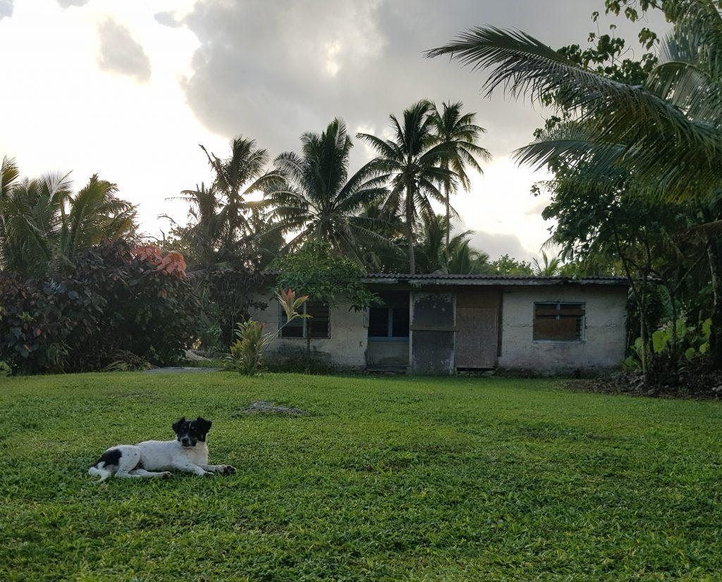 Dog in Avatele