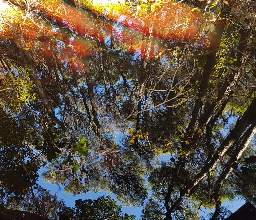 Reflections in Lake Wilkie